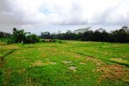 Roadside land for sale in Ubud – TJUB085