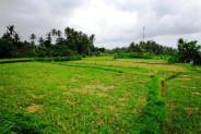 Land for sale in Ubud Tegalalang – TJUB086