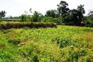 land for sale in Ubud near by Maya Ressort – TJUB088