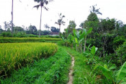 sloping land for sale in Ubud suitable villa – TJUB091