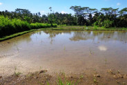 road side land for sale in Ubud with rice field view – TJUB092