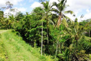 land for sale in Ubud stunning rice field view – TJUB094