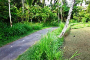 Land for sale in Ubud overlooking to the rice paddies and green valley – TJUB094