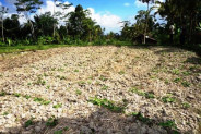 land for sale in Ubud Bali rice field view – TJUB095