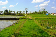 rice fields land for sale in Canggu with river view – TJCG052