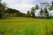 land for sale in Bedugul with Buyan Lake view – TJBE003