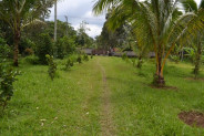 land for sale in Bedugul Bali – TJBE006