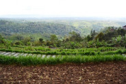 roadside land for sale in Bedugul near strawberry villa – TJBE013