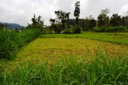 lake and mountain view land for sale in bedugul – TJBE017