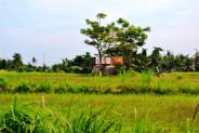 land for sale in Canggu near Pererenan beach. – TJCG037