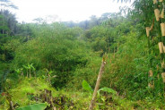 Top cliff land for sale in Ubud – TJUB111