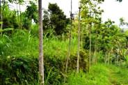 land for sale in Ubud suitable for villa – TJUB033
