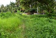 Land for sale in Ubud near BCC hotel Bali – TJUB039