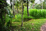 land for sale in Ubud suitable for villa with nice view – TJUB069