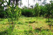 Land for sale in Ubud Tegalalang – TJUB099