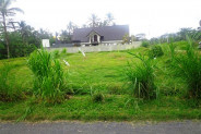 Land for sale in Ubud eith rice field view – TJUB007