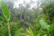 beautiful cliff view land for sale in Ubud – TJUB112