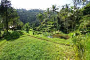 Terraced rice paddys land for sale in Ubud – TJUB114