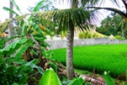 Land for sale in Canggu with beautifull rice fields view – TJCG051