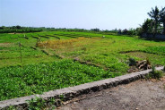 Land for sale in Canggu suitable for villa – TJCG056