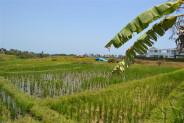 Beautiful Rice Fields Land For sale in Canggu – TJCG061