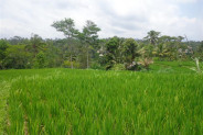Land for sale in Ubud with ayung river view – TJUB129