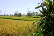 Land for sale in Ubud with Stunning river and rice fields view in Payangan