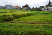 Land for sale in Kerobokan with Rice fields view – TJCG057