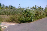 Nice land for sale in Canggu By the Owner