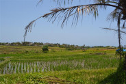 Land for sale in Canggu with beautiful view of rice paddy