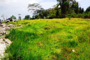 Land for sale in Canggu perfect for villa with view rice paddy – TJCG075