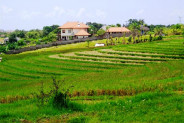 Terraced rice fields view of Land for sale in Canggu perfect for villa