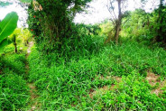 Great view of rice field Land for sale in Canggu Kayu Tulang