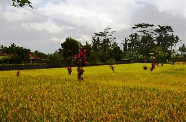 Land For Sale In Ubud With Beautiful Rice Field – TJUB011