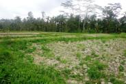 Rice fields Land for sale in Ubud Bali – TJUB107