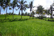 Land for sale in Ubud with Amazing view river valley and rice fields – TJUB113