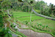 stunning view rice fields land for sale in Ubud Bali Cheap !!! – TJUB115