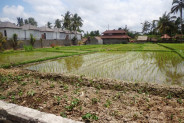 Roadside Land For sale In Ubud Bali – TJUB119