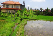 Land for sale in Ubud 1400 m2 Located in Tegalalang