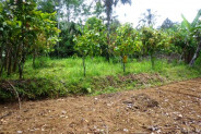 Amazing Land for sale in Ubud Tegalalang – TJUB126