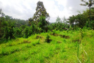 Amazing view river Valley land for sale in Payangan Ubud