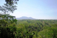 Spectacular mountain and rice fields view land for sale in Ubud – TJUB132