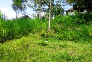 5200 sqm beautiful Land for sale in ubud Tegalalang northen Ubud – TJUB133