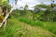 Beautiful Land for sale in ubud 5200 sqm in Tegalalang northen Ubud