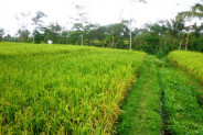 Stunning beautiful view land for sale in Ubud – TJUB135