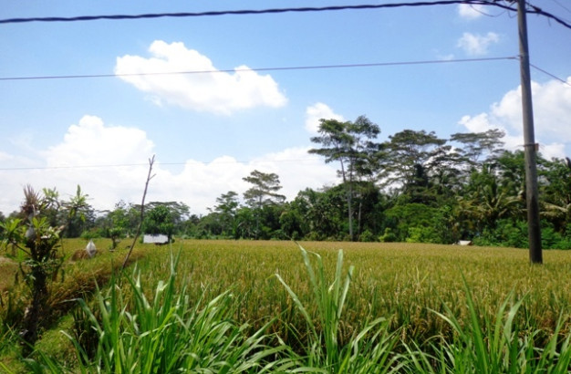 Stunning natural rice fields view Land for sale in Ubud – TJUB138