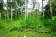 Land for sale in Ubud near to the Pesiden palace Tampaksiring