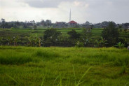 Rice fields Land for sale in Canggu Bali – TJCG065