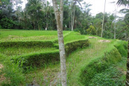Land for sale in Ubud by the river valley with rice fields view in Payangan – TJUB141