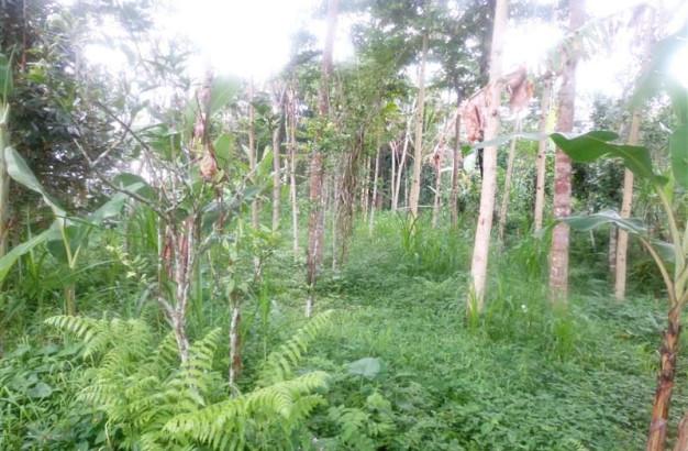 Land for sale in Ubud by the roadside Tegalalang Ubud – TJUB151